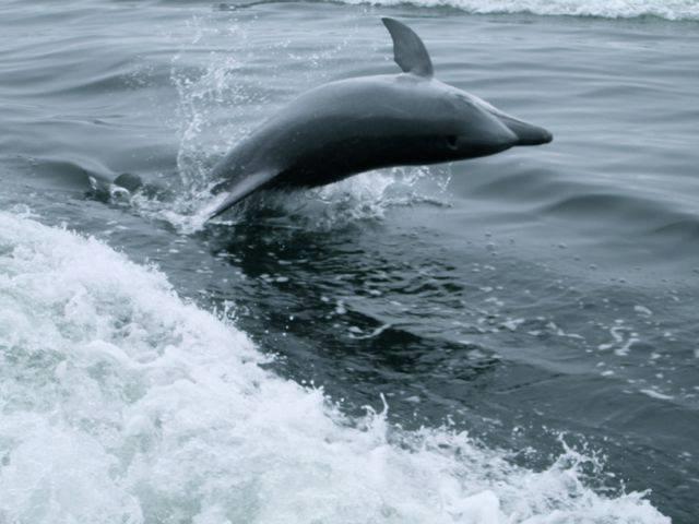 ocean adventures - destination swakopmund
