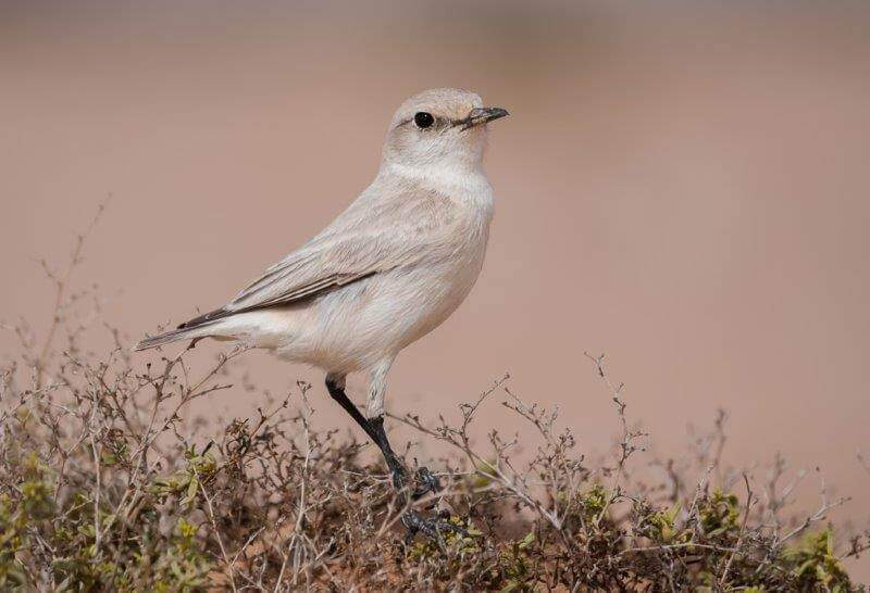 birding safaris - destination swakopmund