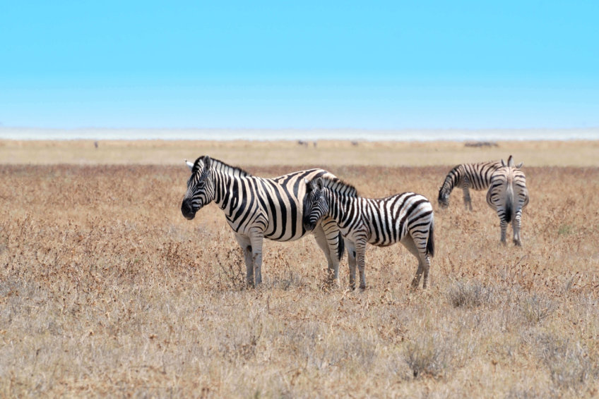 SWA Safaris - destination swakopmund